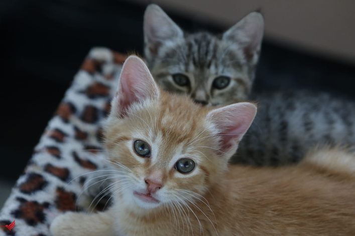Kittens looking for caring home